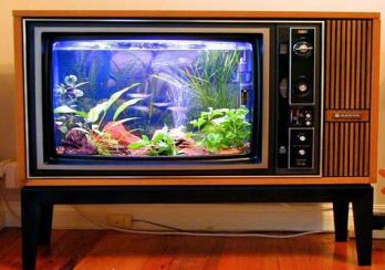 aquarium-unik-dari-barang-bekas
