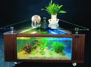 dekorasi-aquarium-ikan-hias
