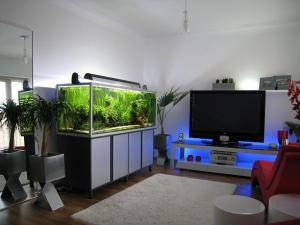 model-aquarium-modern_1